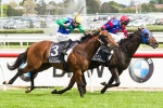 Will All Too Hard Beat Pierro Again in 2012 Cox Plate?