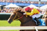 Riley Free to Train Of The Brave in 2015 Blue Diamond Stakes